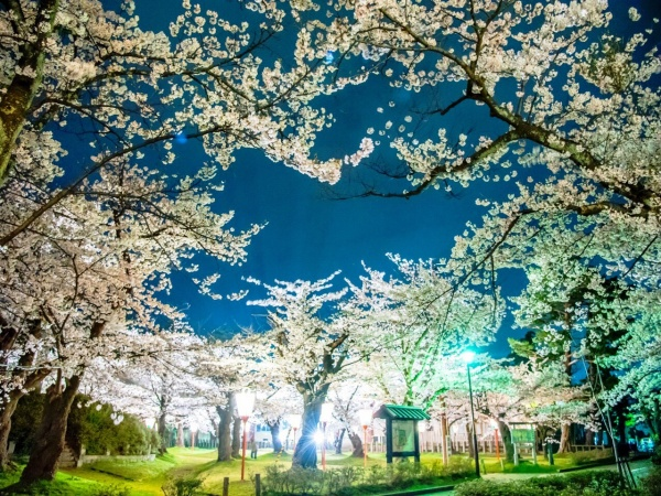 夜桜〜  photograph by Chihiro・S 〜